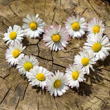 Tips for Staying in the Heart Space of Love