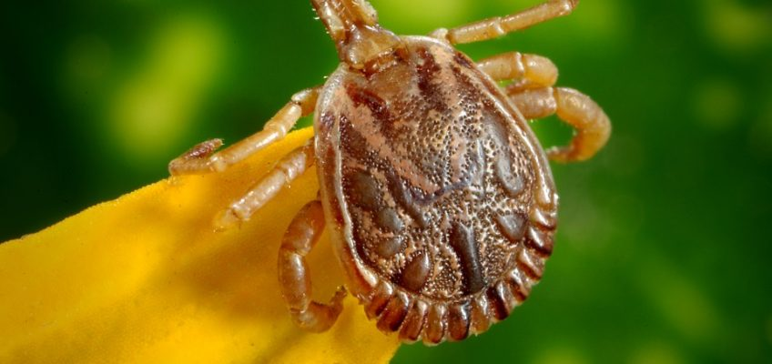 What Fleas and Ticks Are Trying to Tell Us