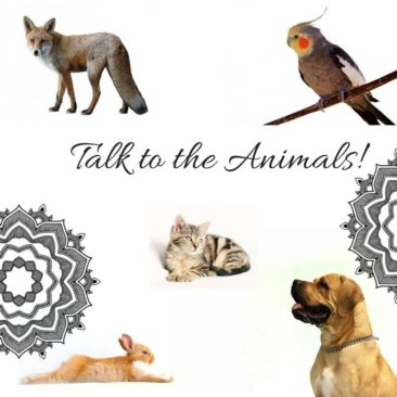 OCTOBER 15 — TALK TO THE ANIMALS SPECIAL EVENT!
