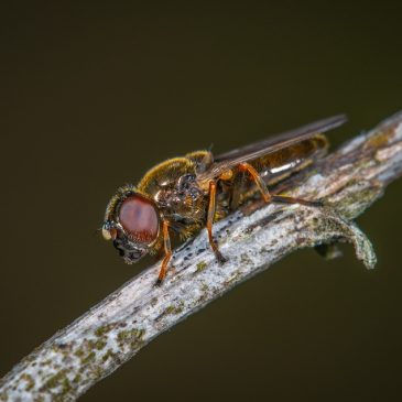 Without Insects, Humans Could Not Live