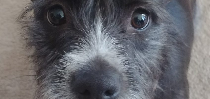 J.J.'s Story: Learning to Accept An Animal's Gifts and Help, With Loving Guidance
