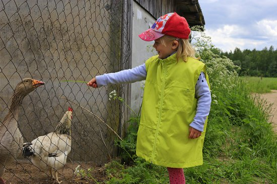 young girl with ball cap feeding a goose with a chicken. Part of  Earth Healing Foundations educational programs