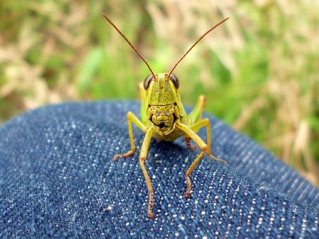 Insect Armageddon-Fact or Fiction?