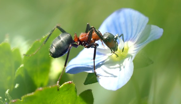 Ant gathering pollen from a flower. Animal chat-messages